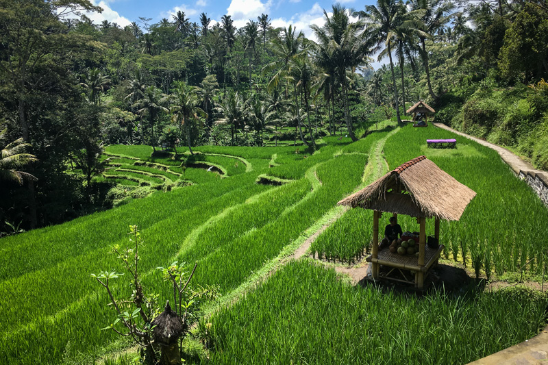 Indonésie 2017
